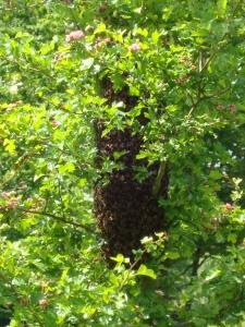 Swarm at Court Lodge 28 May 2009