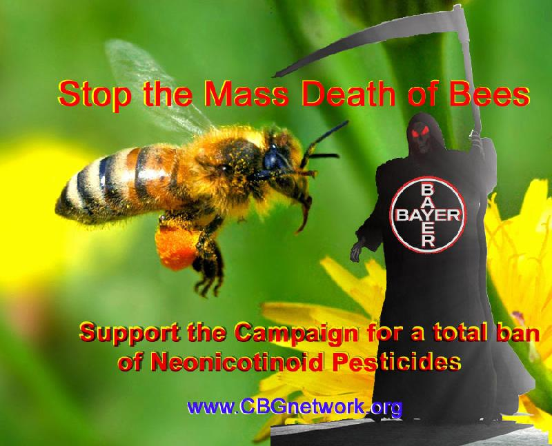 Why Neonicotinoids Are Bad for Bees