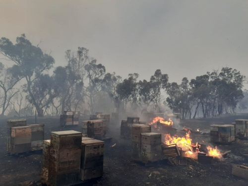 Australian Beehives on Fire
